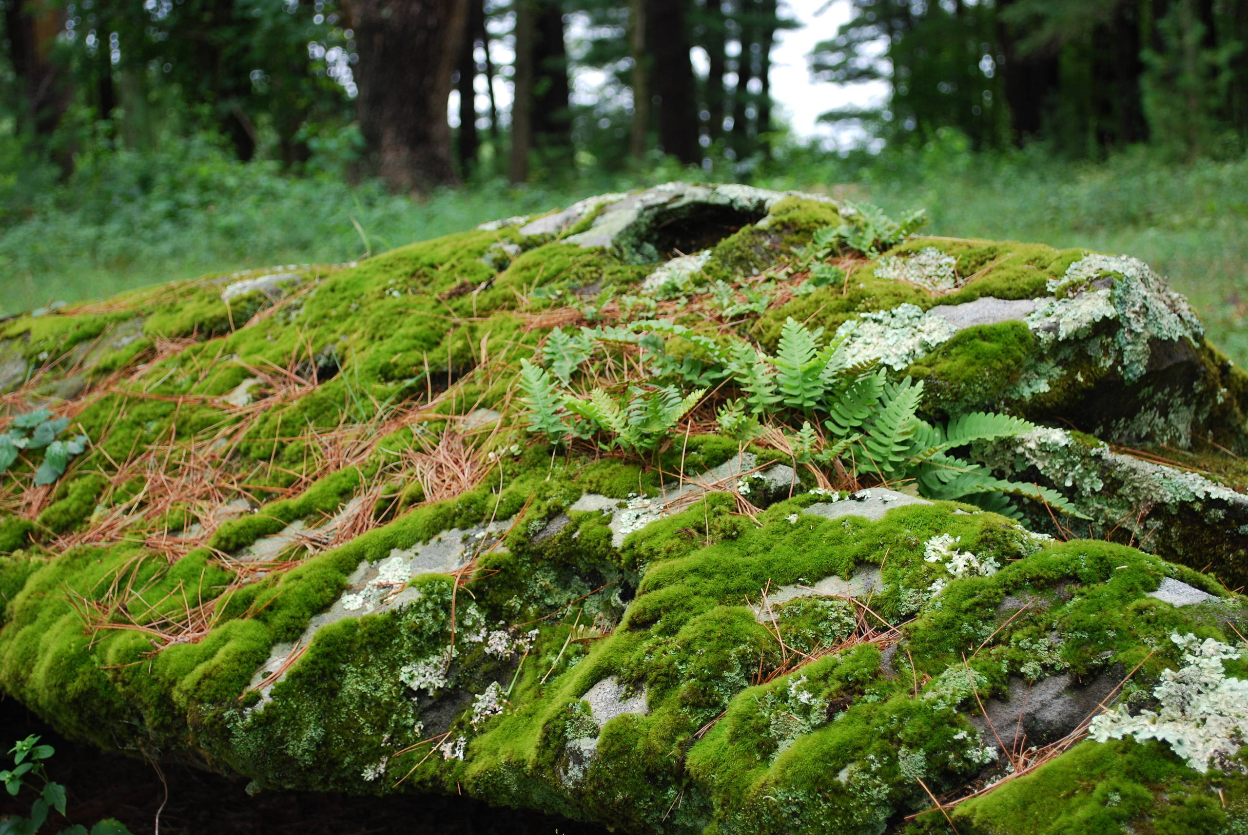 Boulder planted with ferns and moss.