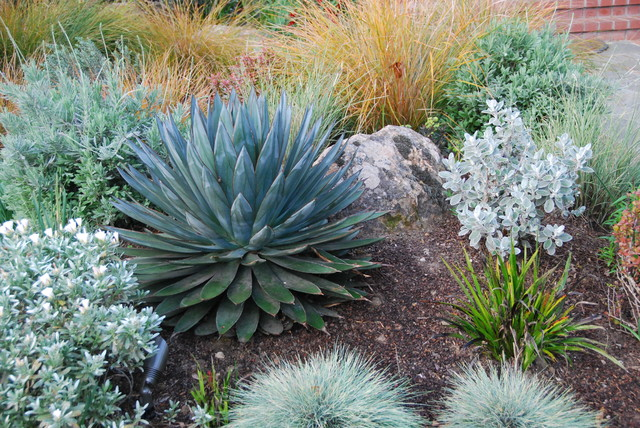 Boulders and a specimen agave 39 blue glow 39 anchor a berm for Verdance landscape design