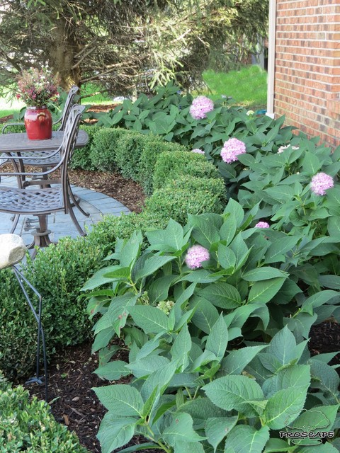 Boxwood and hydrangea planting traditional landscape detroit