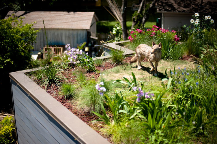 Design ideas for a traditional landscaping in Austin.