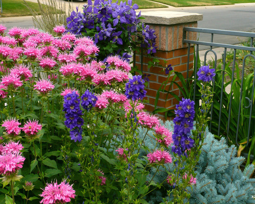 Enhance Curb Appeal With A Colorful Garden Plan Lifescape Colorado