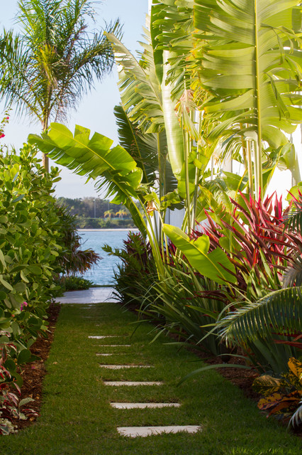 Backyard Jungle Tropical Landscapes : British West Indies  Tropical  Landscape  other metro  by Modus