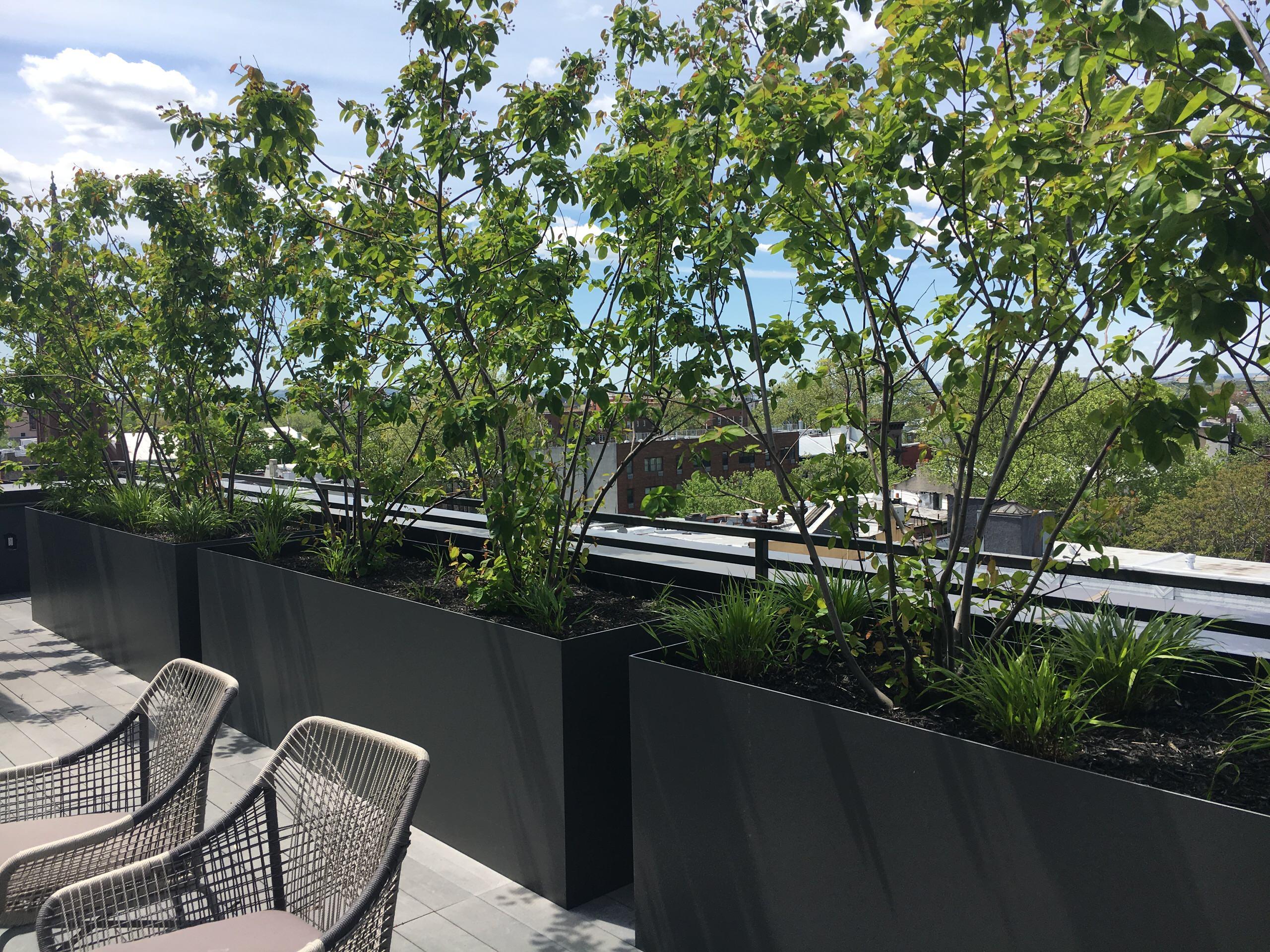 Brooklyn condo common space rooftop