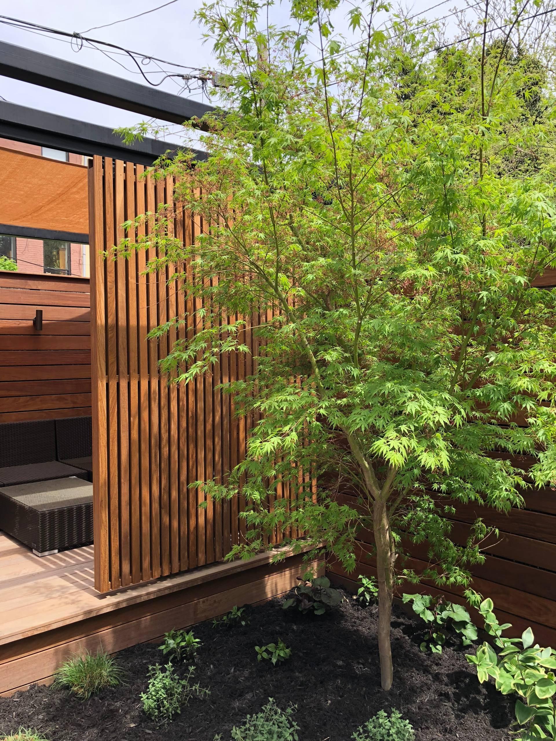 Brooklyn Garden with Pergola