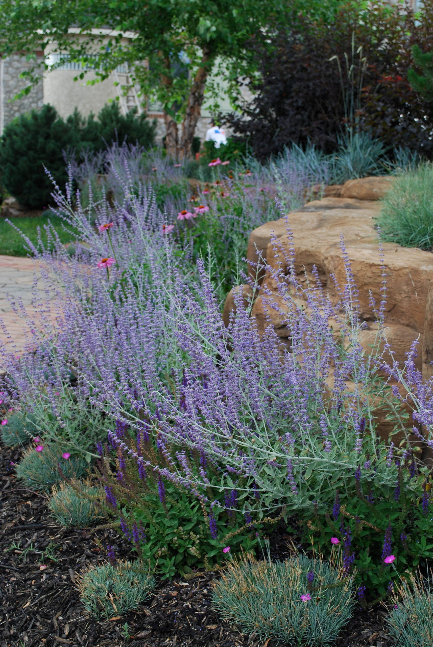 BSR Project Revisited 8 months later. By Sifford Garden Design