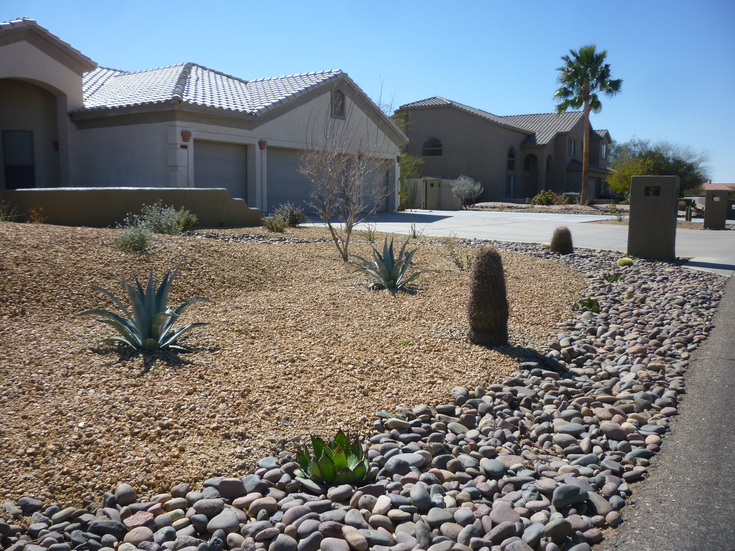 Cacti & Agave Plantings