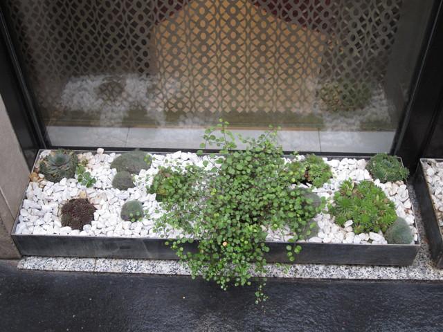 Cactus Garden Idea - Eclectic - Landscape - Other