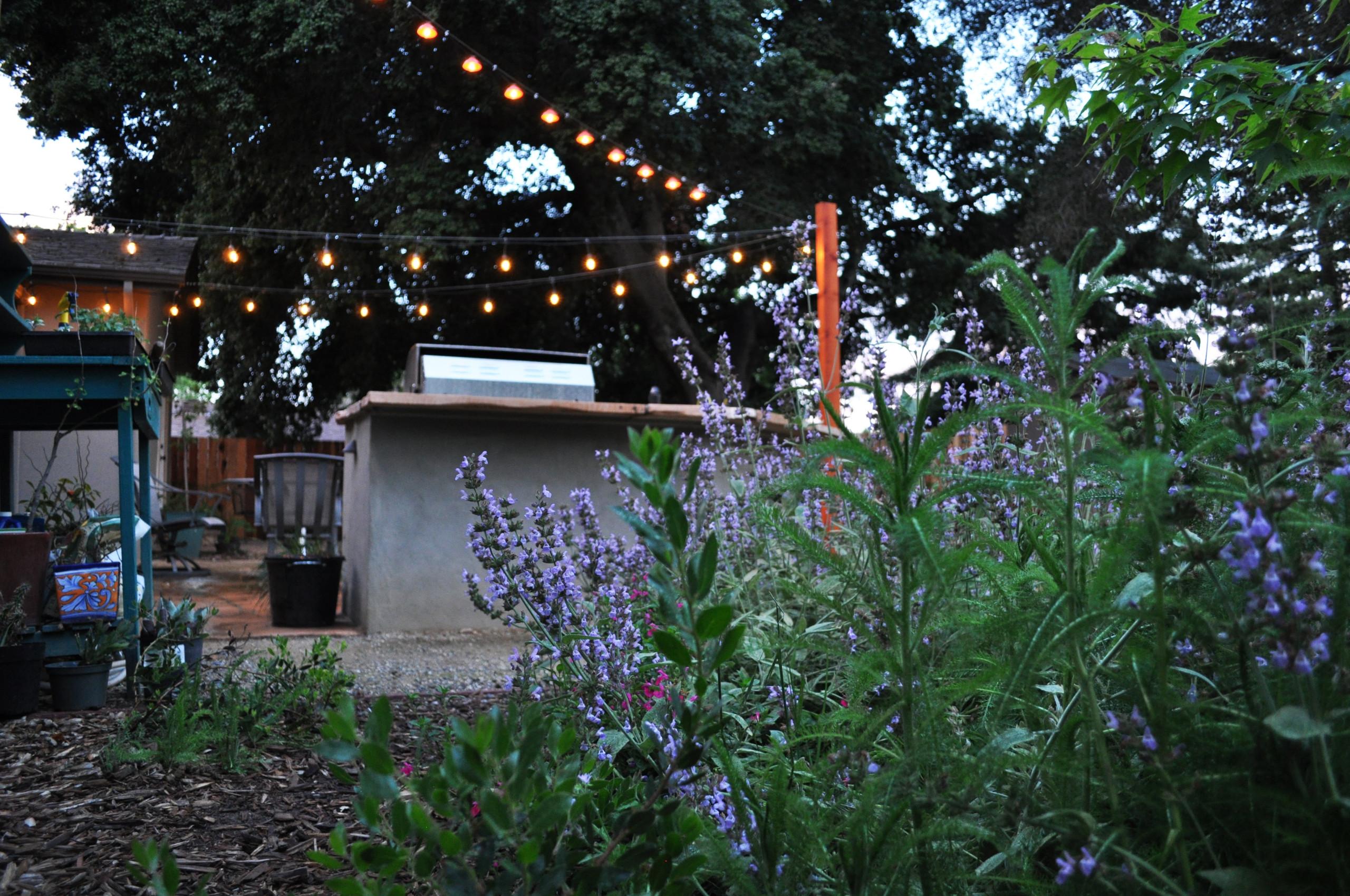 Cal Wild Backyard