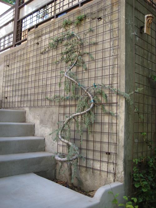 wire trellis