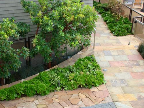 San Diego Nifty 50 Plant List
