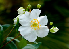 20 White Flowers to Illuminate Your Garden