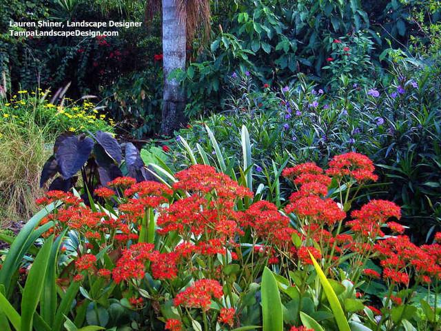 Carrollwood Cottage Garden Tropical Landscape tampa
