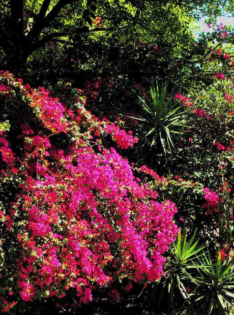 Carrollwood Tampa FL Landscape Cottage Color Garden