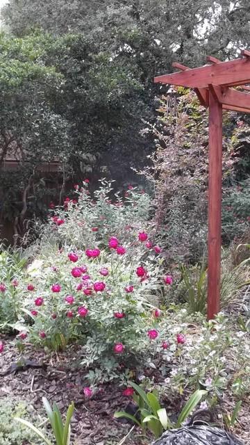 Carrollwood, Tampa, FL, Landscape: Cottage, Color Garden