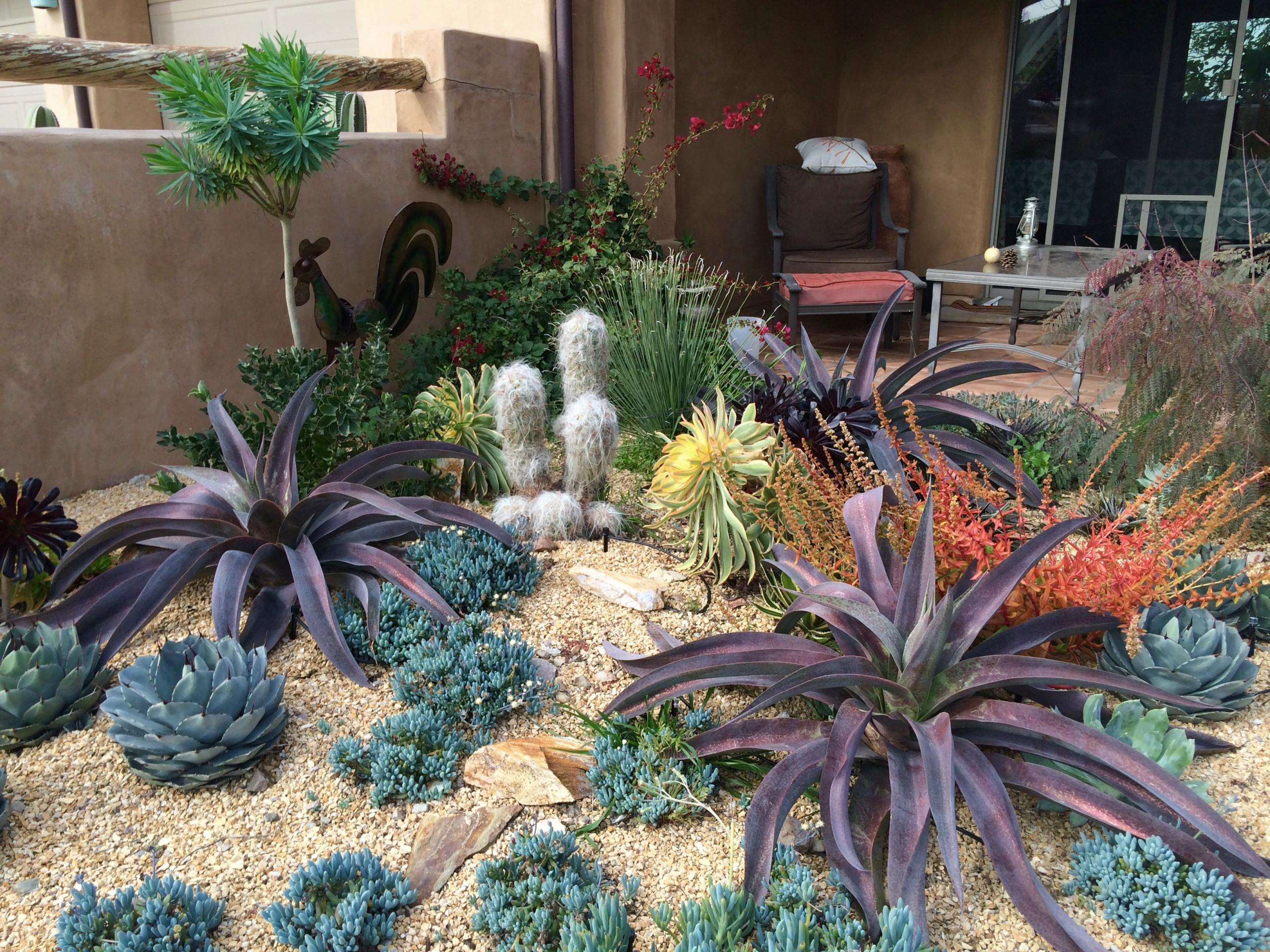 75 Beautiful Desert Landscaping Pictures Amp Ideas June