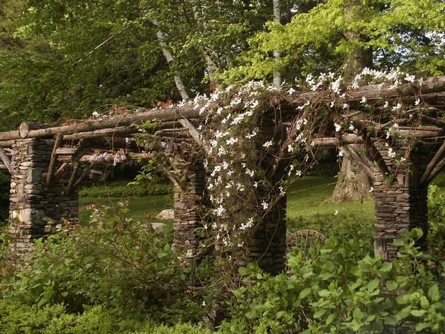 Cascading Jasmine on the Pergola rustic-landscape