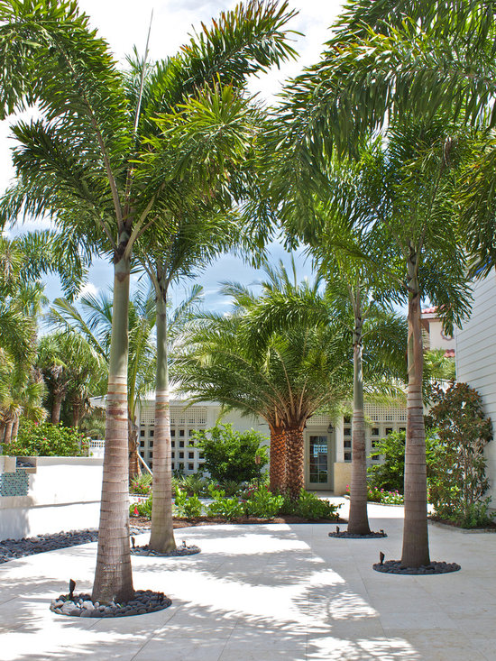Pygmy date palm landscape design ideas pictures remodel for Garden design with palms