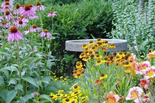 How To Have Your Own Mini Wildflower Meadow In The City