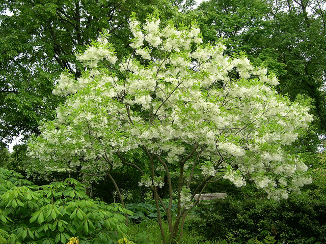 7 Deer Resistant Flowering Trees To Plant This Fall
