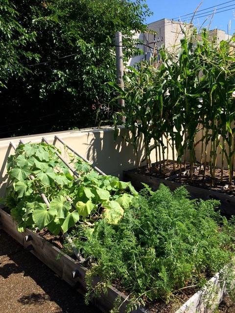 City Rooftop Vegetable Garden Contemporary Garden Other By