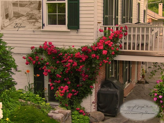 Climbing Rose Traditional Landscape New York By