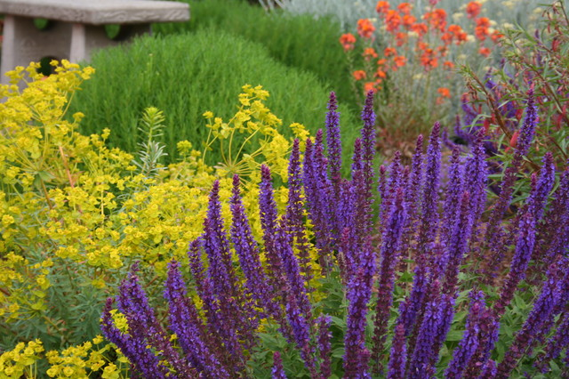 Garden Color How To Landscape With Purple