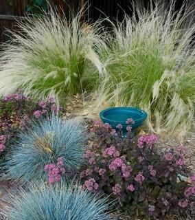 Colorado Springs Xeriscape Garden Mediterranean Landscape Denver By Sunflower Designs Llc