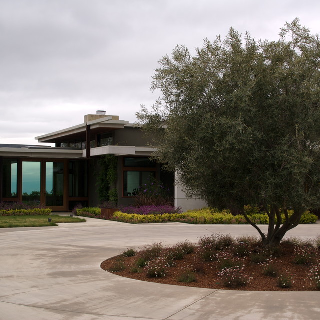 Colored concrete circular driveway with olive tree and mow for Circular driveway landscaping pictures