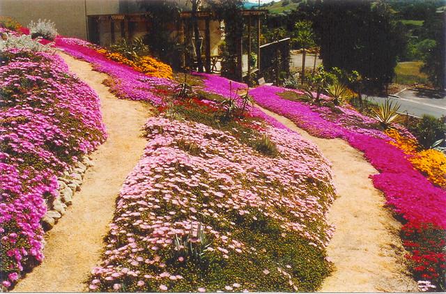 Colorful Dry Garden modern-landscape