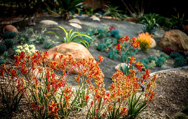 Colorful flowering plants modern landscape san diego for Colorful plants for landscaping