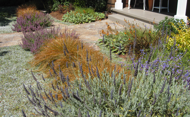 Colorful plants with colors and textures in mill valley ca garden mediterranean landscape - Mediterranean garden plants colors and scents ...
