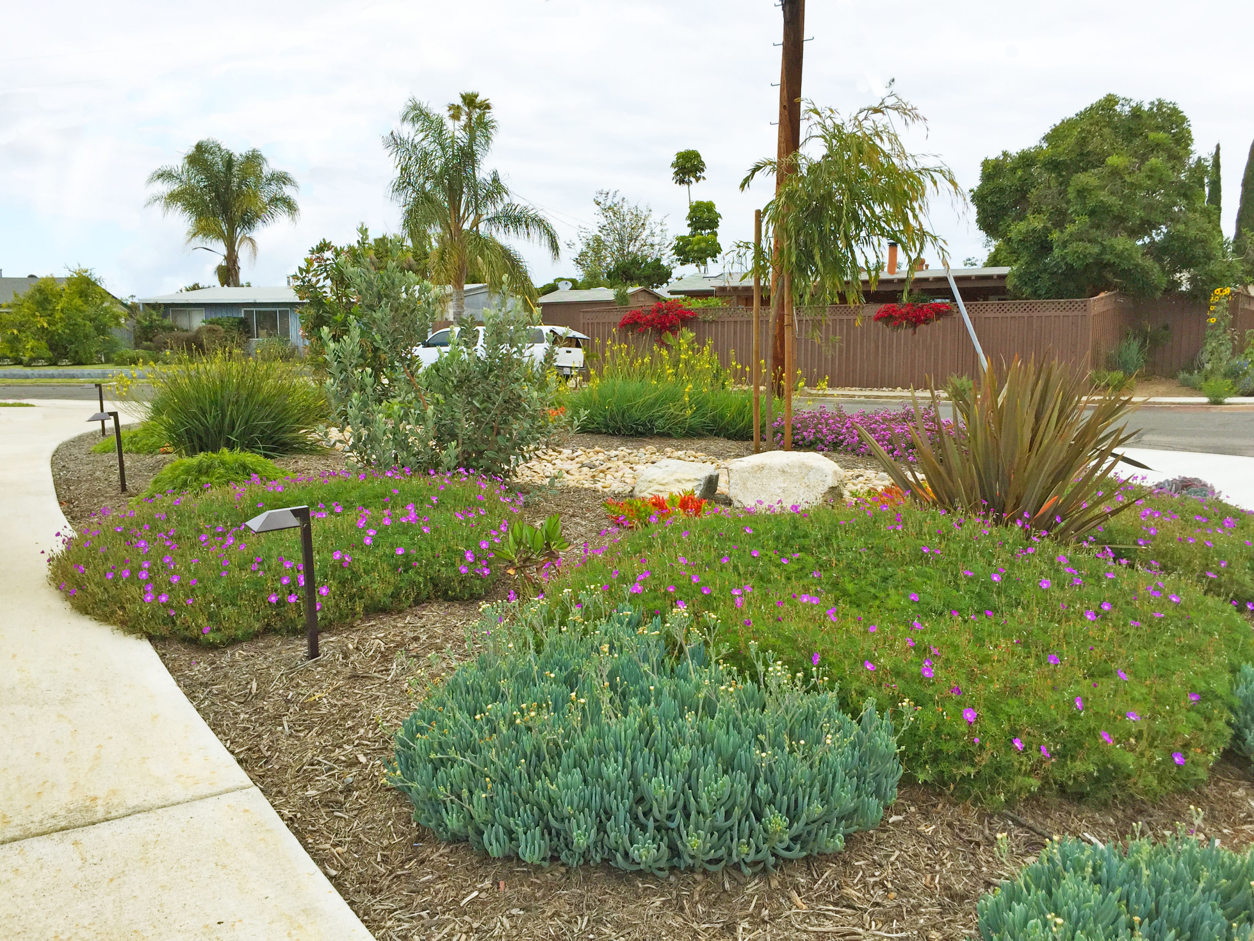 Colorful Water-Wise Garden