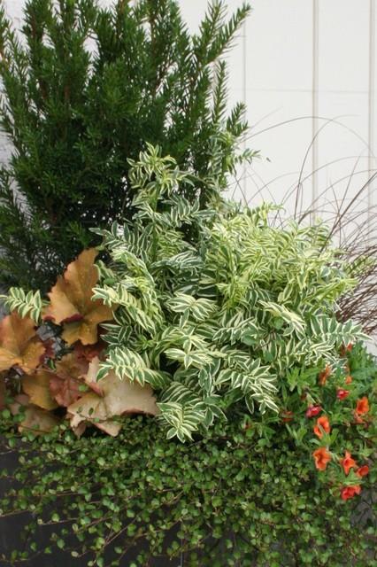 Combine Foliage Color and Texture landscape