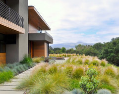concrete stepping pads, Ipe deck, water feature, grasses modern landscape