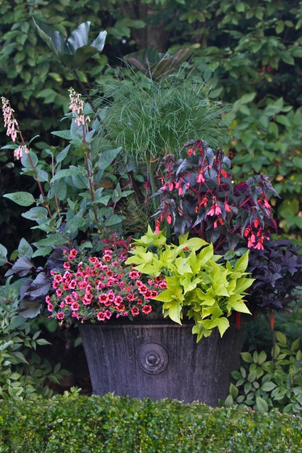 Container Gardening Magazine, 2012 Edition traditional landscape
