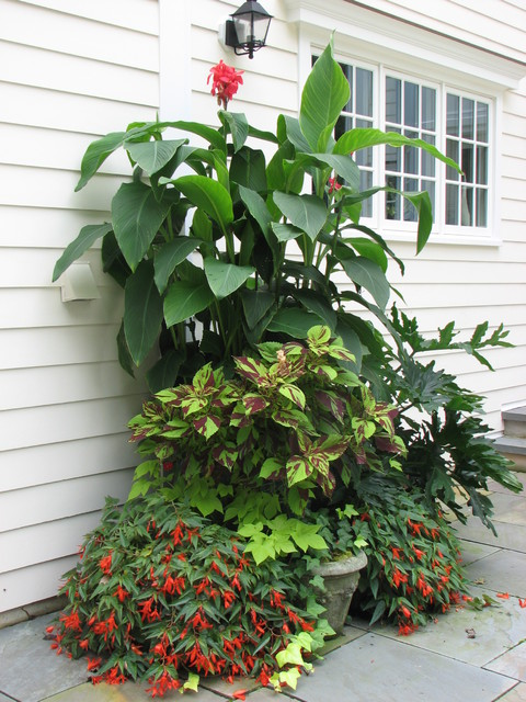 Container Gardens traditional-landscape