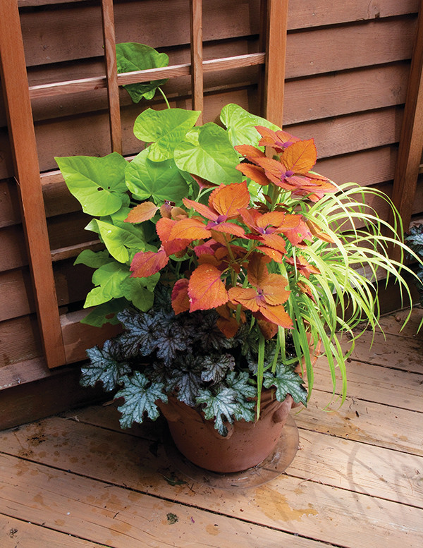 Container Gardens, Planters, Urns, Window Boxes