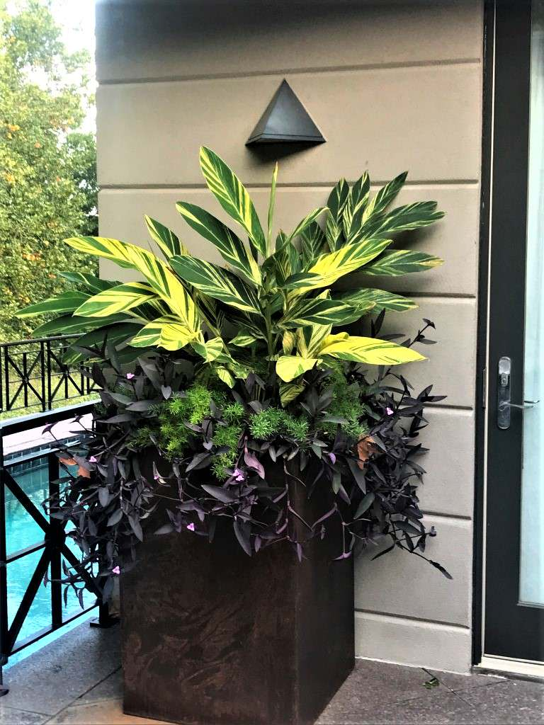 Container Plantings; Bold Spring and Summer