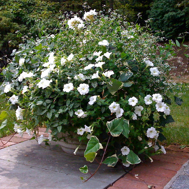 container plantings for summer