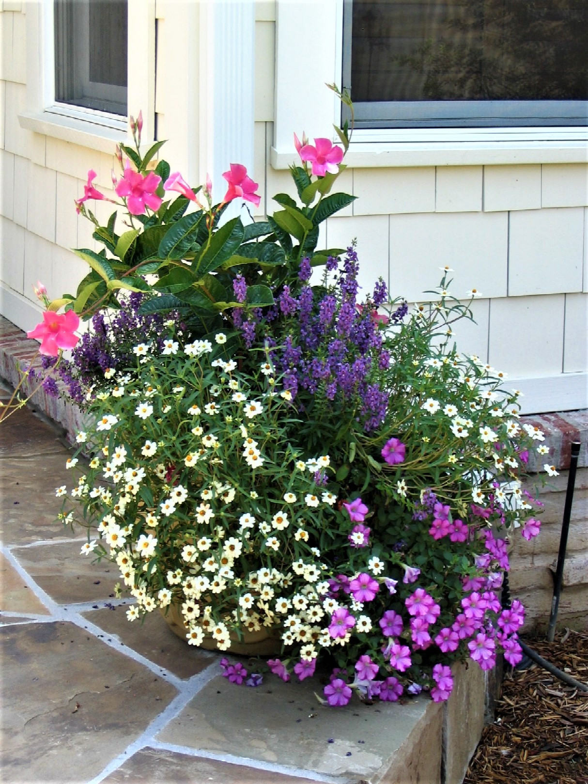 Container Plantings: Spring and Summer