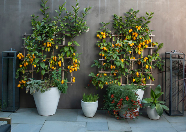 10 Top Trees To Grow In Containers, Best Large Potted Plants For Patio