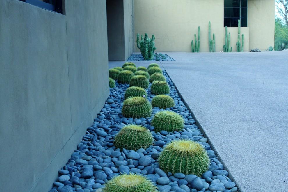 Contemporary Cactus Garden