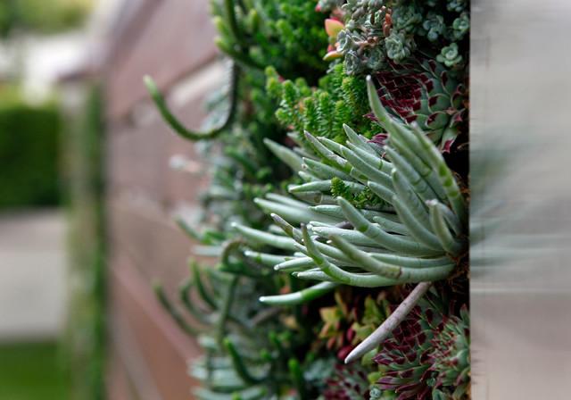 Vertical Gardening contemporary-landscape