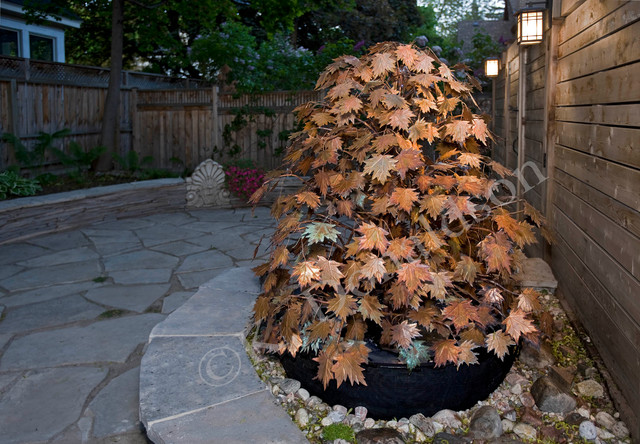 Nice Copper Maple Leaves Garden Fountain Contemporary Landscape