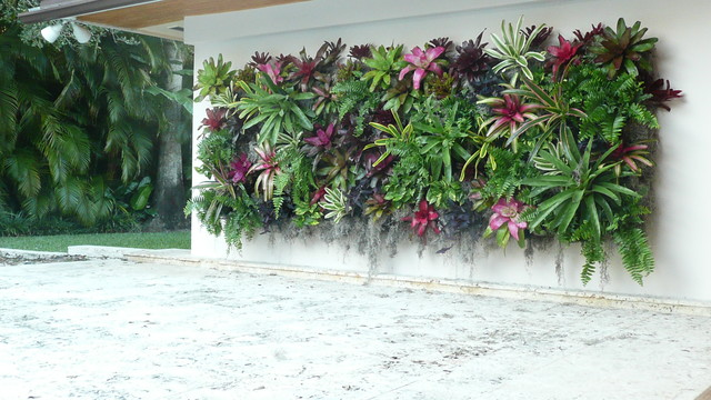 Coral gables green wall tropical landscape miami for Decoration jardin tropical