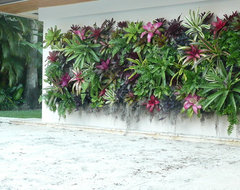 Coral Gables Green Wall tropical-landscape