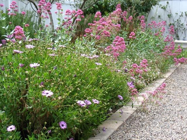 Cottage garden shabby chic landscape san diego by designs by shellene - Shabby chic giardino ...