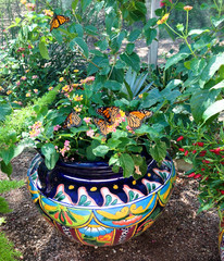 Create a Container Wildlife Habitat for Hummingbirds and Butterflies