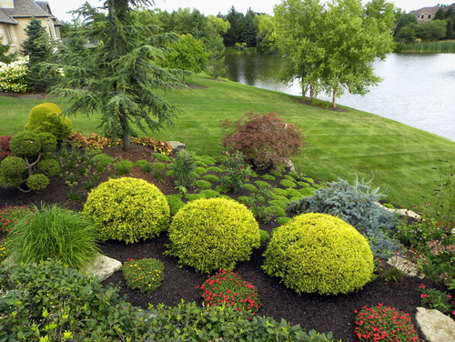 What are plant names especially round green shrubs for Front yard landscaping plants