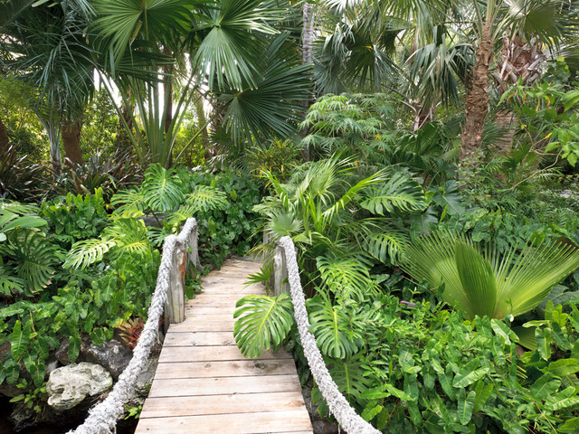 Davids garden for Tropical garden design